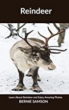 Reindeer: Learn About Reindeer and Enjoy Amazing Photos