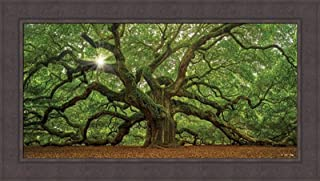 Home Cabin Décor The Tree by Moises Levy 24x42 Southern Angel Oak Charleston SC Spanish Moss Ferns Photograph Framed Art Print Picture
