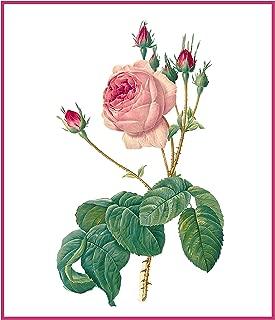Orenco Originals Redoute's Centifolia Bullata Rose Flower Counted Cross Stitch Pattern