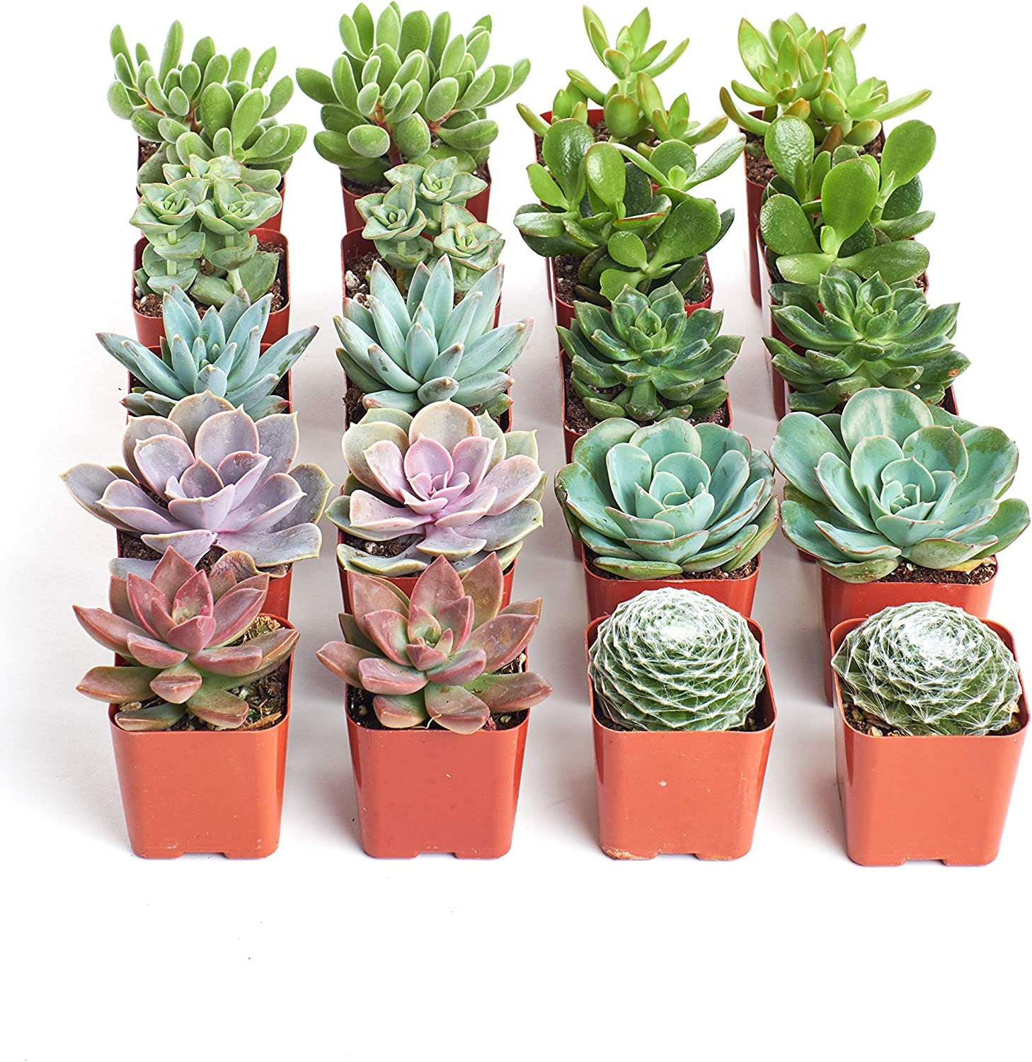 Shop Succulents Unique Assorted Live Selected Plants High quality new Tulsa Mall for Hand