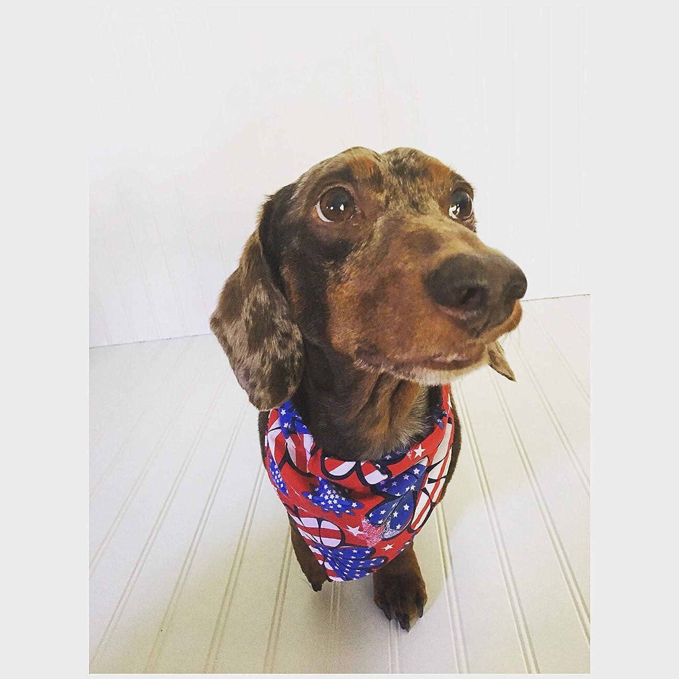 Miniature Dachshund Scarf Dachshund Clothes Dachshund Pajamas Memorial Dog Clothes Stars & Stripes Small Dog Neckware