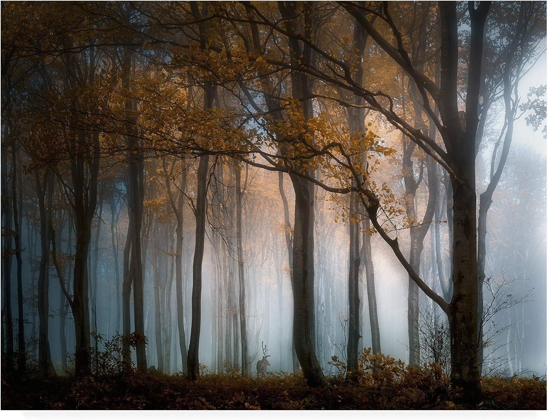 Trademark Fine Art Fog Through Autumn Forest by Veselin Atanasov, 14x19