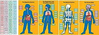 Best skeleton bulletin board ideas Reviews