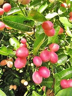 Best saskatoon berry seeds Reviews