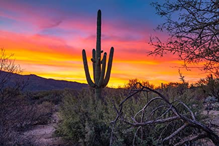 Southwest Photography Wall Art Print - Picture of Saguaro Cactus and Desert Landscape with Colorful Sunrise near Tucson Arizona Western Decor 5x7 to 40x60