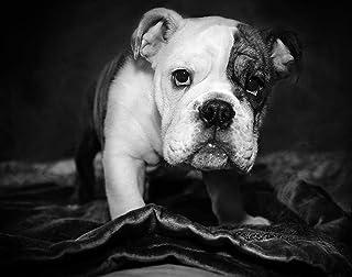 Regali di Bulldog Inglese Per gli Amanti Dei Cani, Stampe su Tela di poster varie dimensioni, regali di amante del Bulldog...