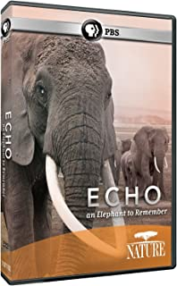 echo the elephant