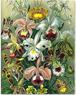 Best art nouveau botanical Reviews