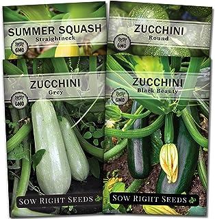 Squash LUNAR F1 7 Seeds vegetable garden COMPACT easy grow SPRING SUMMER veggie