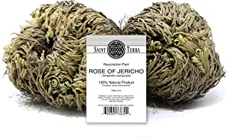 Best resurrection plant for sale Reviews