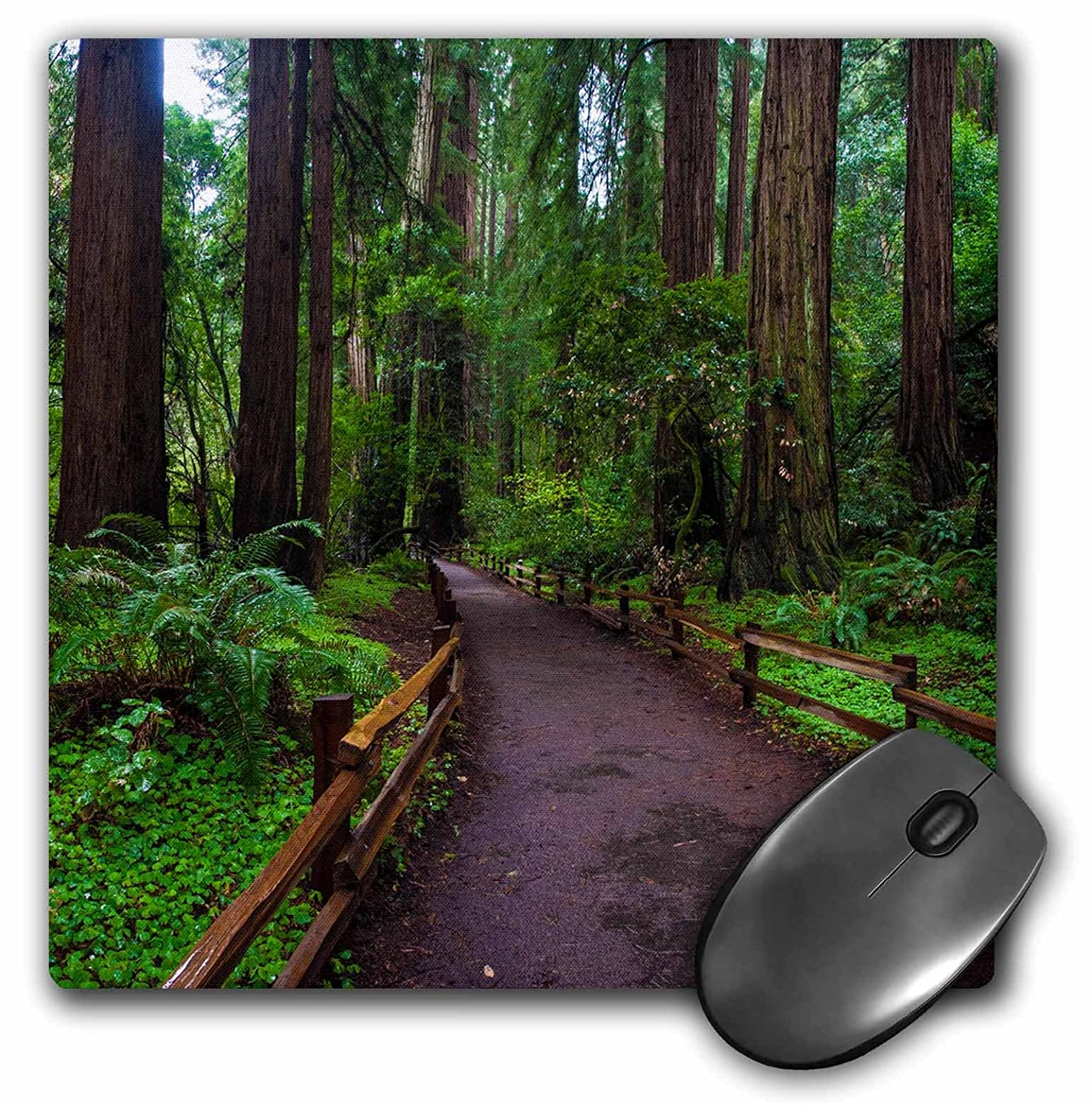3dRose USA California Path Among Redwoods in Muir Woods Nm Mouse Pad (mp_189469_1)