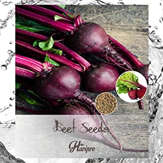 Beet Seeds - Beets Seeds for Planting Outdoors Home Garden - Red Ruby Queen Beets Organic Seeds - Non GMO - High Germinati...