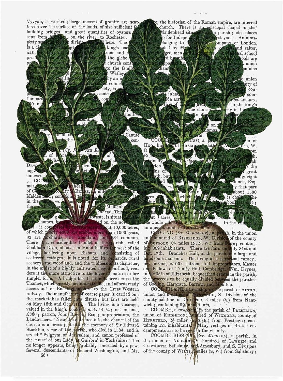 Trademark Fine Art Radishes Print by Fab Funky, 14x19