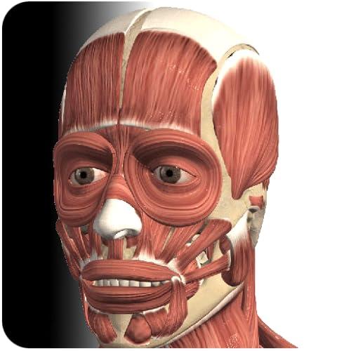 『Visual Muscles 3D』の1枚目の画像
