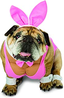 Best funny english bulldog costumes Reviews
