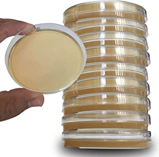 Potato Dextrose Agar Plates - Evviva Sciences - Sterile Prepoured Potato Dextrose Agar PDA Petri Dishes - Excellent Media for Growing Molds & Fungus - Great for Mushrooms & Science Fair Projects