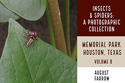 Insects & Arachnids: A Photographic Collection: Memorial Park: Houston Texas - Volume 8 (Arthropods of Memorial Park) (English Edition)