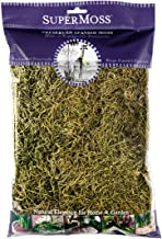SuperMoss (26967) Spanish Moss Preserved, Basil, 8oz (200 cubic inch)