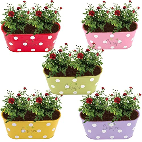 CINAGRO - Pack of 5 Polka Dotted Oval Railing Planter, Plant Holder, Balcony, Home Garden - Violet, Pink, Yellow, Lemon, Red Colors