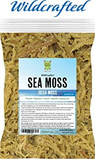 Dualspices Fresh Premium Superfoods Irish Moss/Sea Moss 16 oz - 100% Natural Wildcrafted - Non GMO - Vegan - Raw Directly from JAMAICA