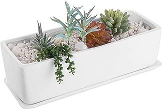 white box plant