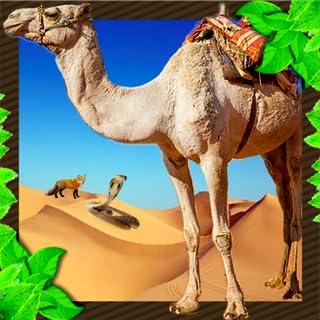 Wild Camel Attack Unlimited Simulator