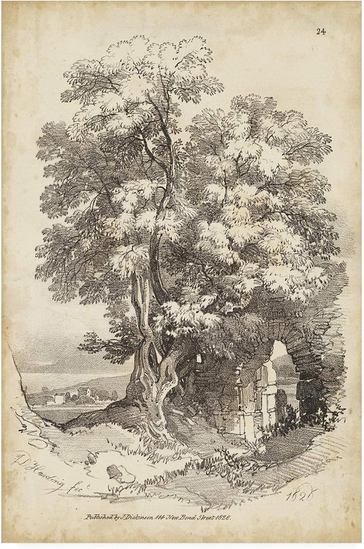 Trademark Fine Art Noble Tree II by J.D. Harding, 12x19