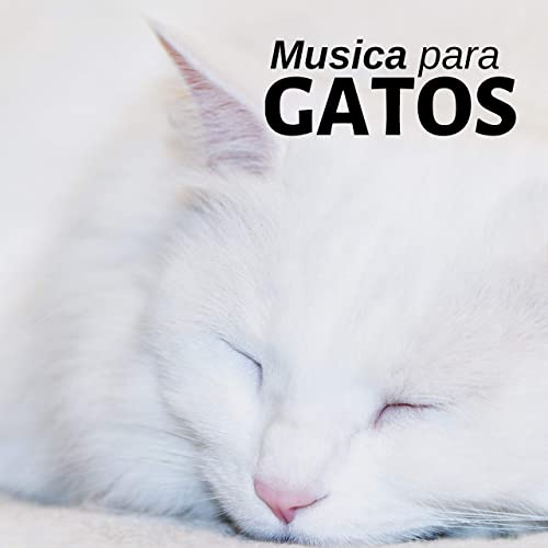 Auto Control by Gato Peluche on Amazon Music - Amazon.com