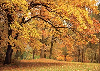 AIIKES 7x5ft Vinyl Photography Backdrop Autumn Forest Yellow Fall Leaves Grass Park Photo Background Children Baby Adults Portraits Backdrop 10-078