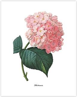 Hydrangea Art (Pink Flower Print, Botanical Summer Wall Decor) Pierre Redoute – Unframed