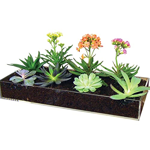Indoor Succulent Garden Amazon Com