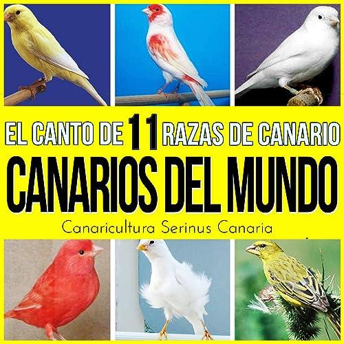 Canarios Del Mundo El Canto De 11 Razas De Canario Canaricultura Serinus Canaria By Sonido Y Cantos De Pajaros On Amazon Music Amazon Com