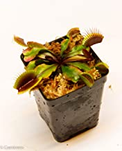 Best carnivorous plant nepenthes Reviews