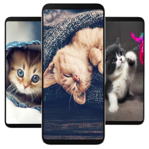 4K Kitten Wallpapers