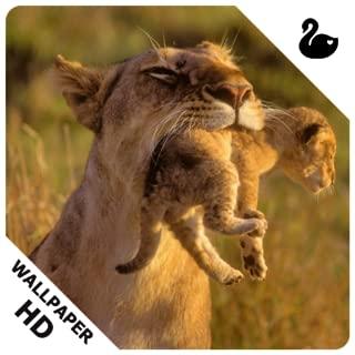 Wild Animals Cub HD Wallpapers