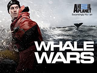 whale wars attack