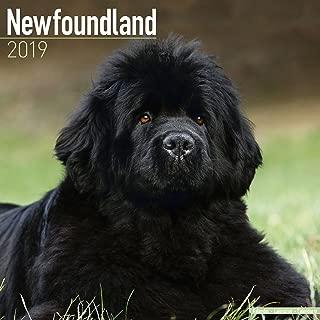 Newfoundland Calendar - Dog Breed Calendars - 2018 - 2019 Wall Calendars - 16 Month by Avonside