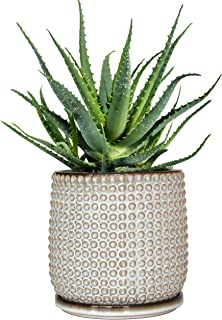 Beaded Stoneware Pot with Drainage Hole and Tray, Smoke White Ceramic Plant Pot, 6 Inch Round Planter Pot for Succulents, Flower and Plants, Indoor or Outdoor - by D'vine Dev