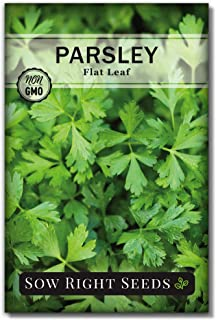 Sow Right Seeds - Flat Leaf Parsley Seed for Planting - Non-GMO Heirloom - Instructions to Plant and Grow a Kitchen Herb G...