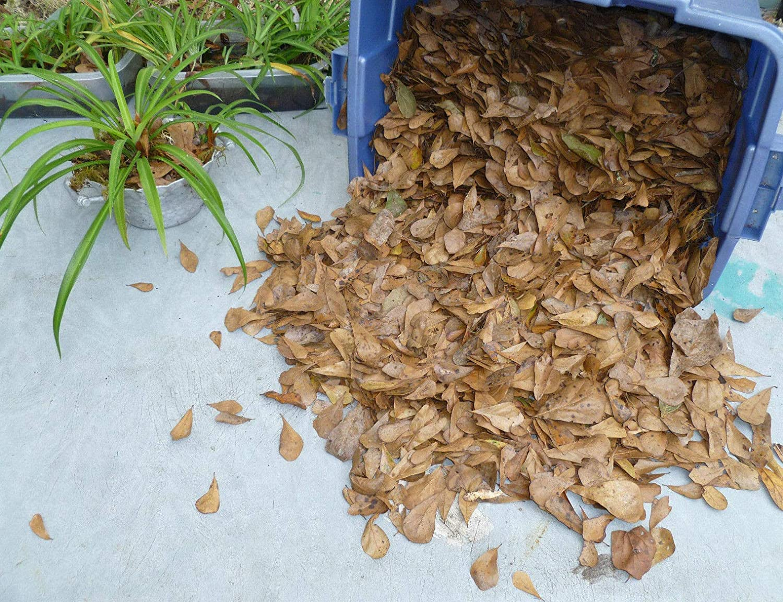 1 Gallon Manufacturer direct delivery Dry Organic Oak Leaf Popularity Dart Vivariu Frog Terrarium Litter