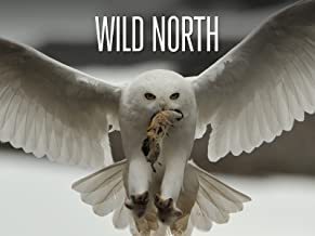 Best wild north documentary Reviews