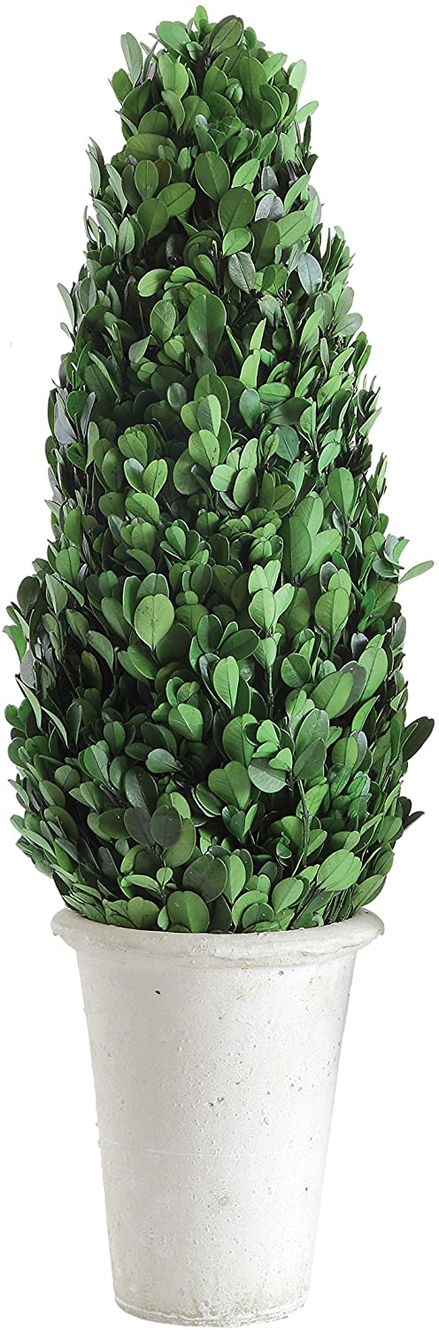 Creative Co-Op Boxwood Topiary 2021 model Pot low-pricing Large Clay in