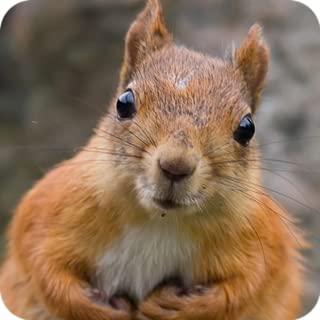 Talk Squirrel Voice Changer - High Pitch Squirrel