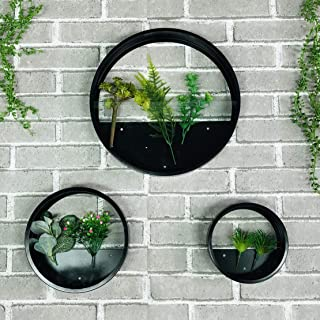 MYRU 3 Pieces Set Iron and Glass Wall Vase Planter for Flowers and Plants, Luxury Round Circle Hanging Flower Pots Wall De...