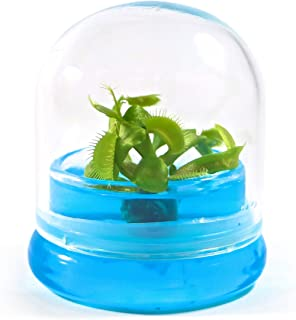 "BLOOMIFY Venus Flytrap Terrarium - Zero Care - 100% Growth Guarantee - 2.5"" Dome"