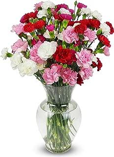 Benchmark Bouquets 20 stem Rainbow Mini Carnations, With Vase (Fresh Cut Flowers)
