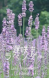 遅咲きのラベンダー 四季の自然の写真集: 身近にある美しい自然 版権フリー、商用利用可の写真集 (扇デザインスタジオ)
