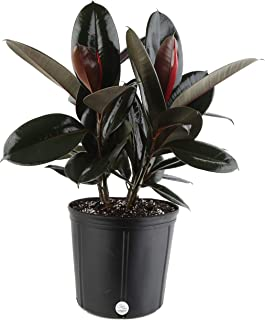 plastic pots for plants online india