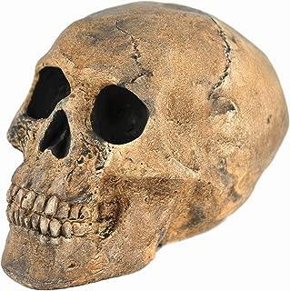 Best skull fire pit stones Reviews