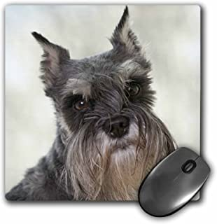 3dRose LLC 8 x 8 x 0.25 Inches Schnauzer Mouse Pad (mp_21046_1)
